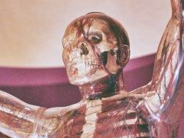 menselijk-lichaam