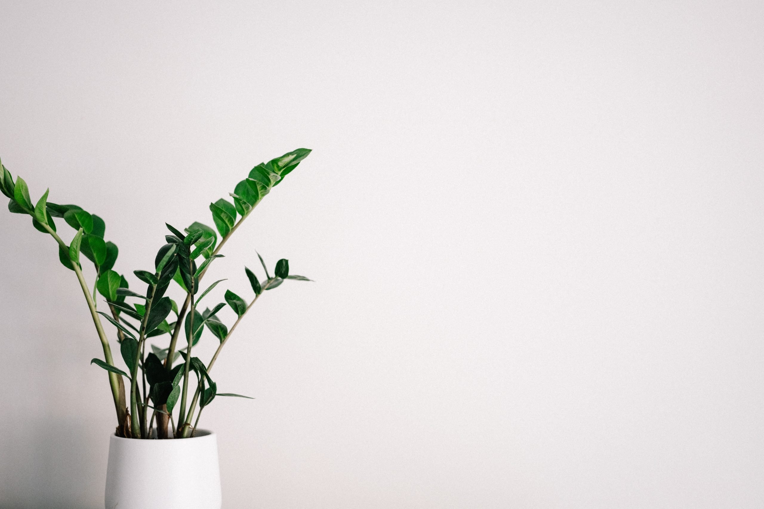 plant-minimalistisch