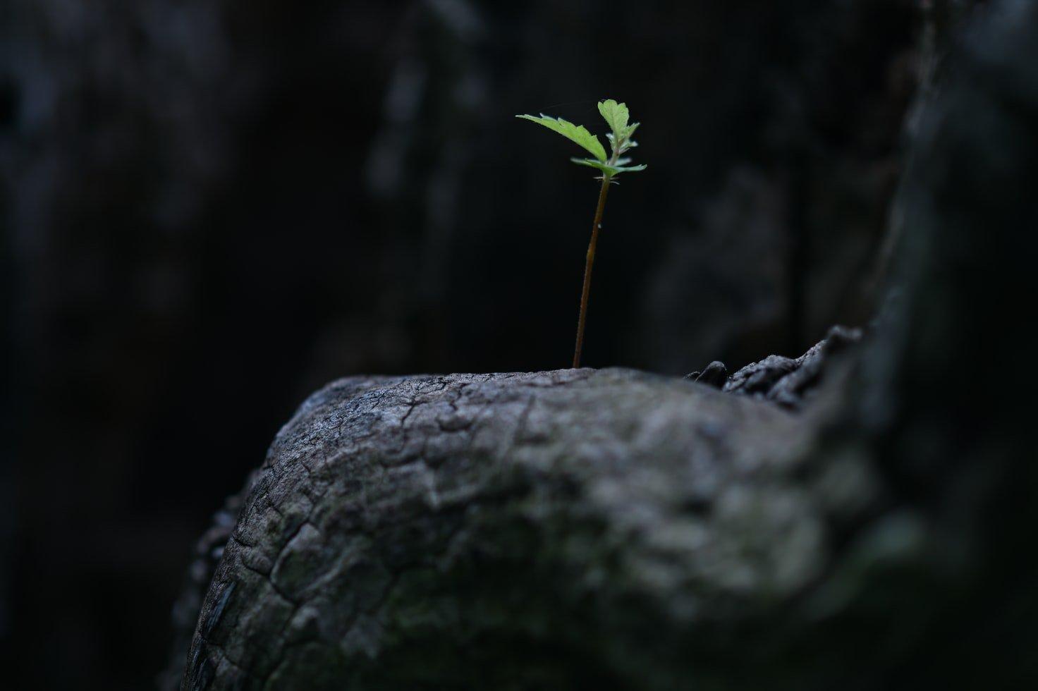 plantje-groei
